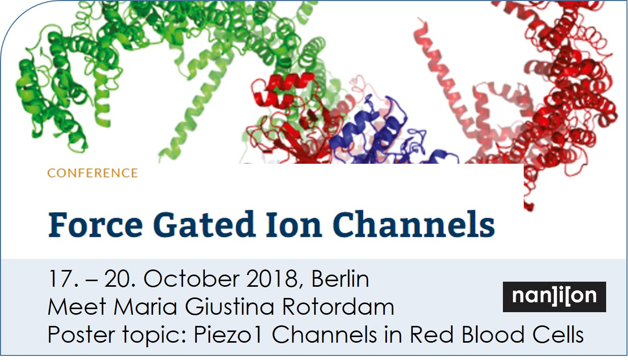 181017 event image Force Gated Ion Channels