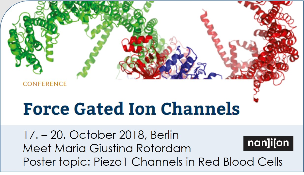 181017 event image Force Gated Ion Channels 2
