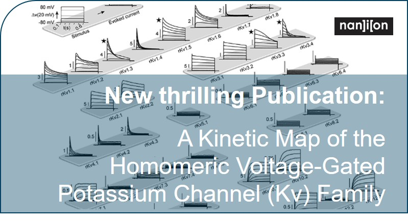 06.09.2019: New publication on the kinetics of KV channels