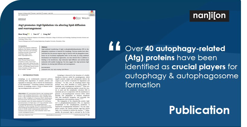 17.09.2020: Publication Alert - Atg3 promotes Atg8 lipidation via altering lipid diffusion and rearrangement
