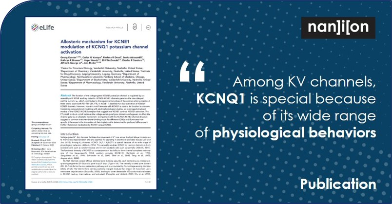 16.11.2020: Publication Alert - Allosteric mechanism for KCNE1 modulation of KCNQ1 potassium channel activation