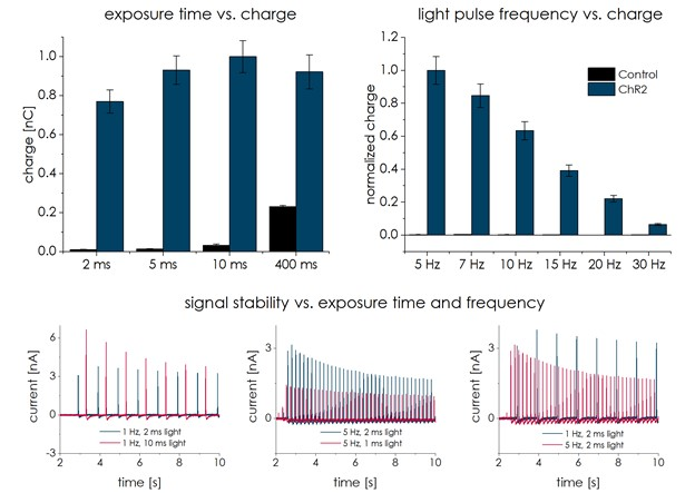 ChR2   Exposure time and frequency of light Figure5