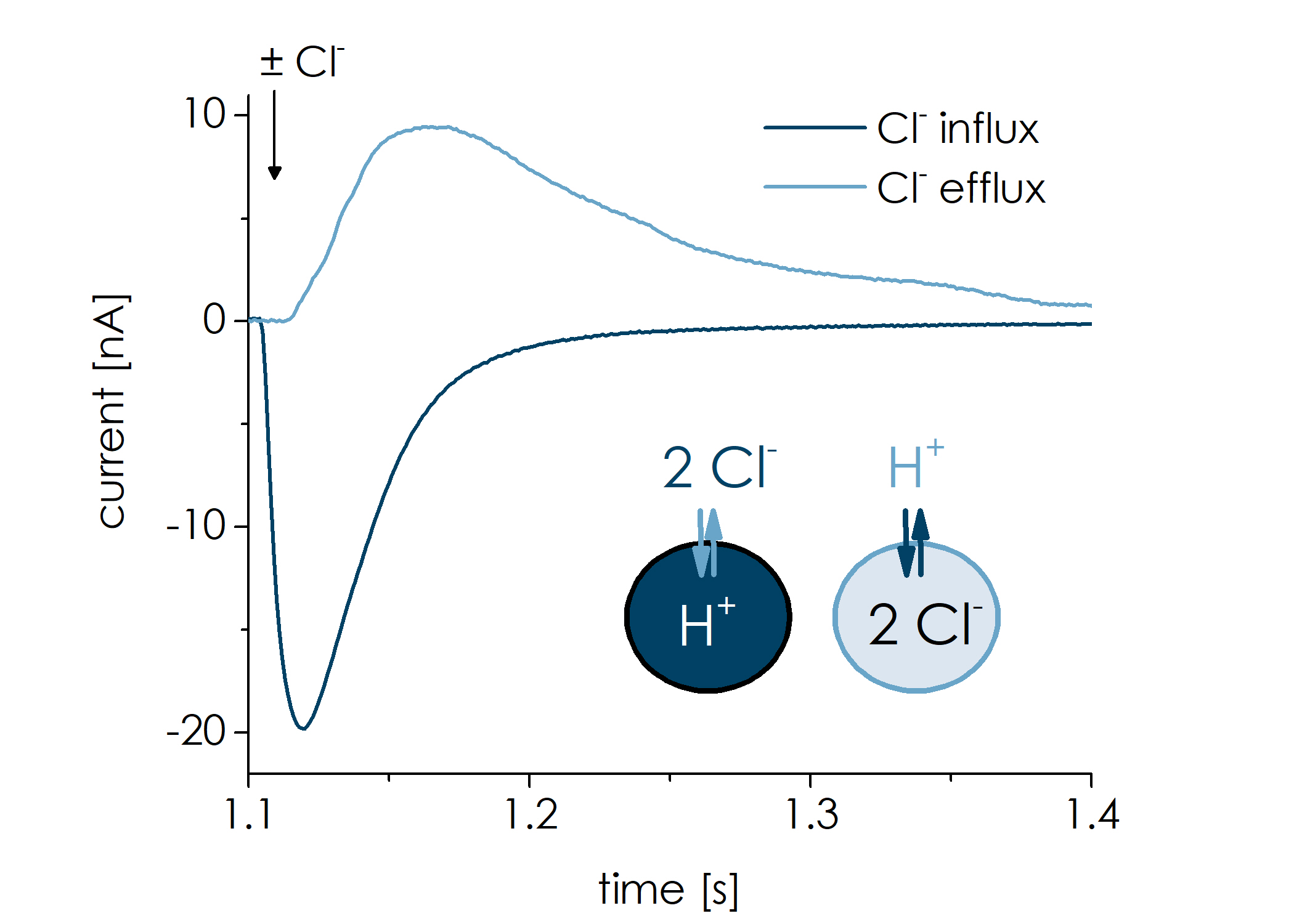 Clc Figure 1   transient currents Influx vs Efflux