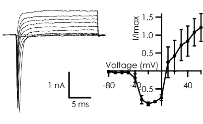 NaIV Neurons Figure1
