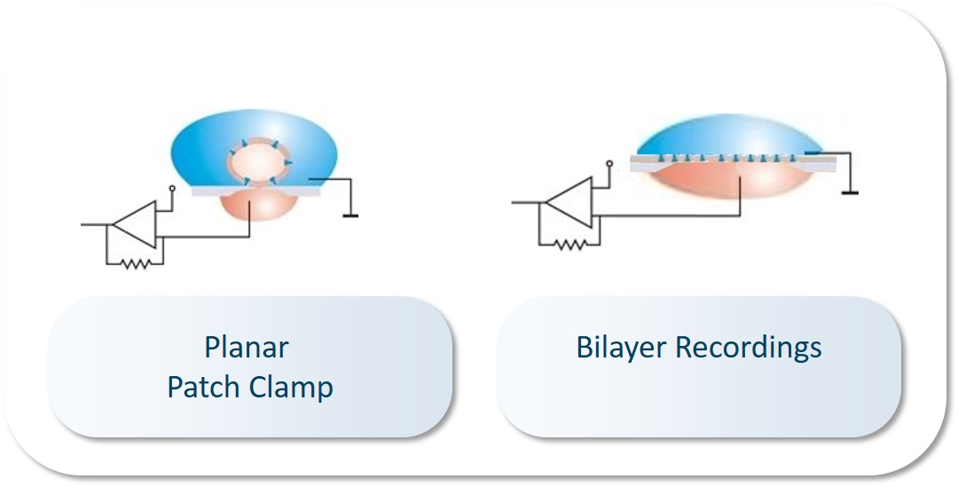 Bilayer Recordings