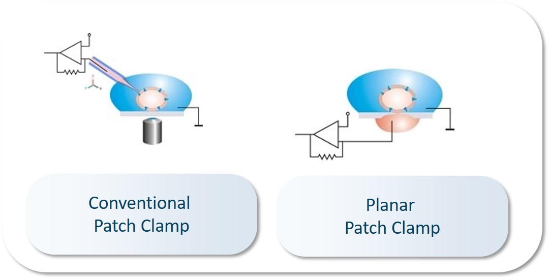 Planar Patch Clamp